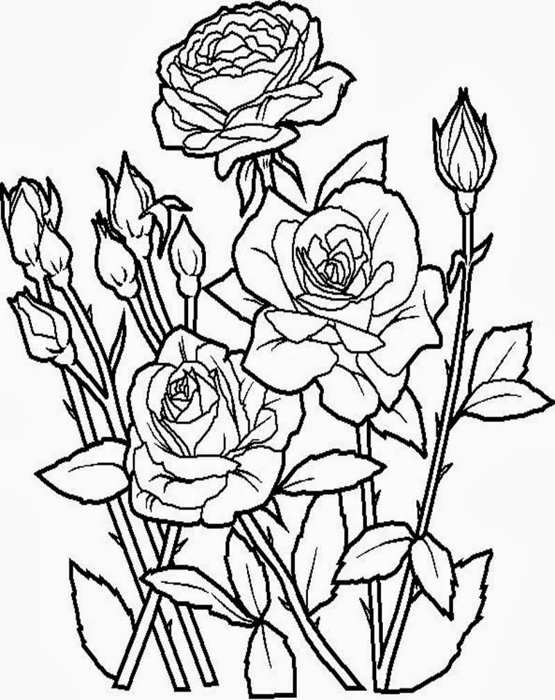 Image result for mewarnai bunga mawar Related image