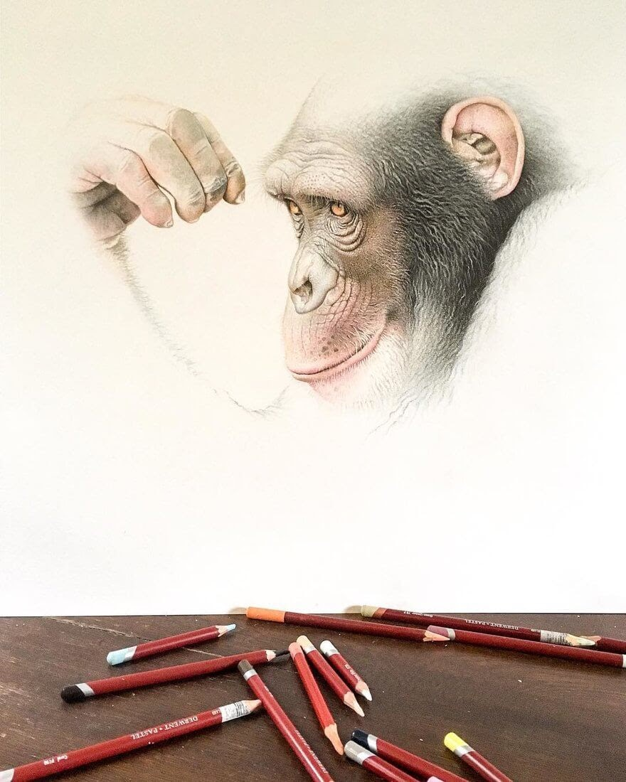 08-Chimpanzee-mART-Realistic-Wildlife-Animal-Drawings-www-designstack-co