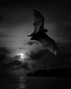 Murciélago volando en la noche, con la luna oculta tras las nubes.