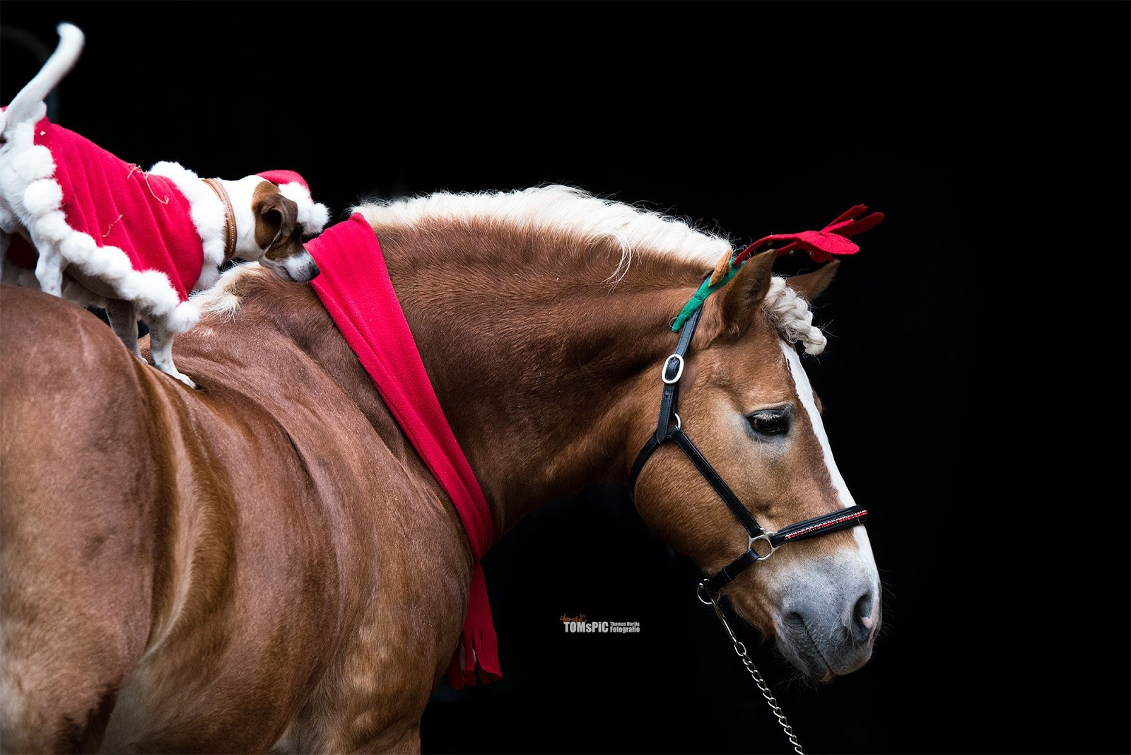 tacchi a cavallo merry christmas