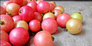 Apa nama buah kersen masih terdengar aneh di pendengaran anda 19 Manfaat Buah Kersen/Ceri untuk Kesehatan