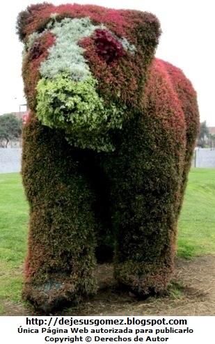 Foto de un oso en Arte Topiario de Jesus Gómez