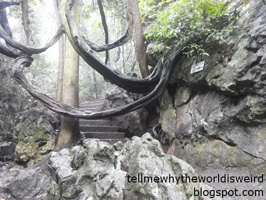 Rock stairs with a huge sagging tree branch growing above them