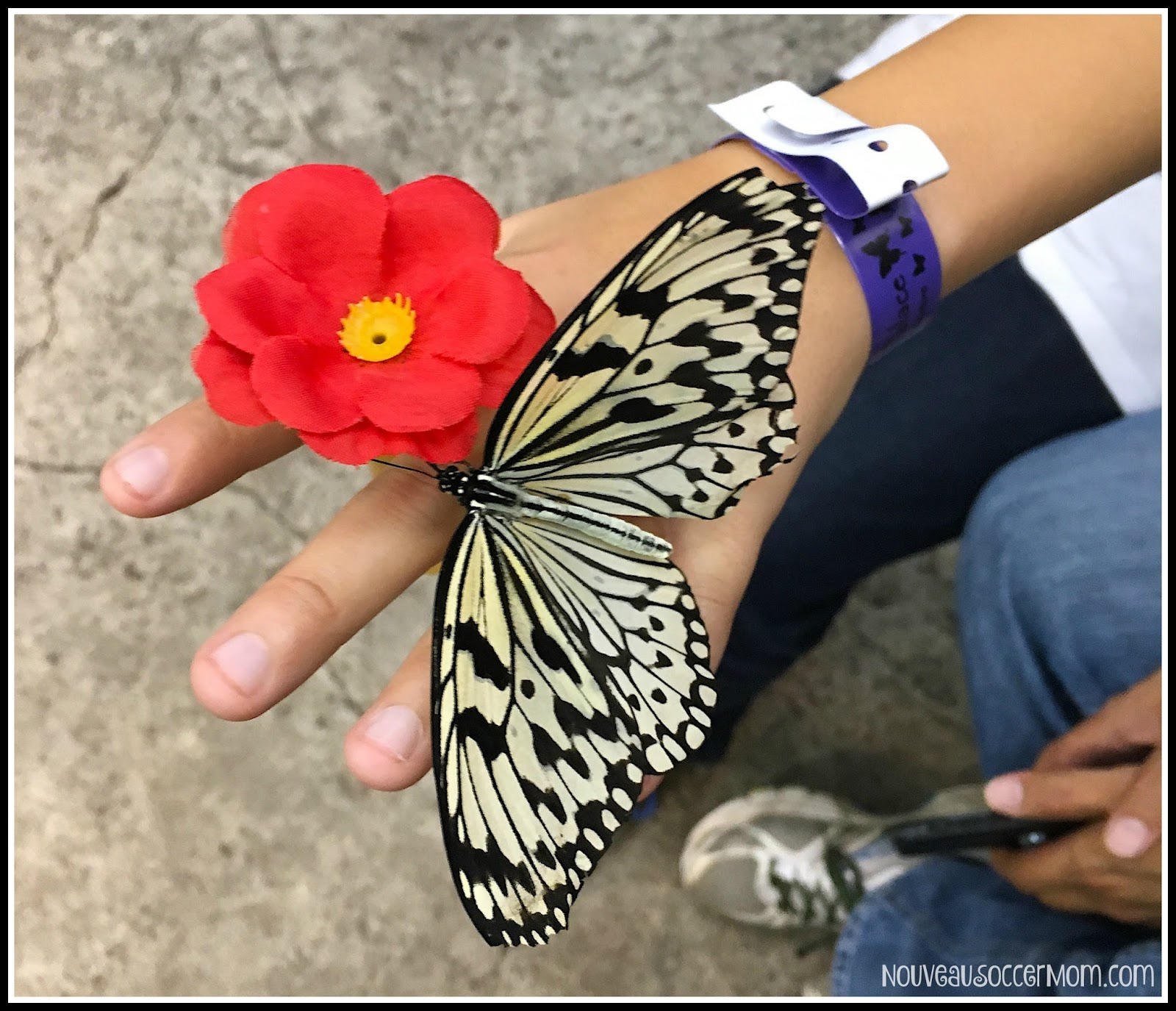 the diary of butterfly