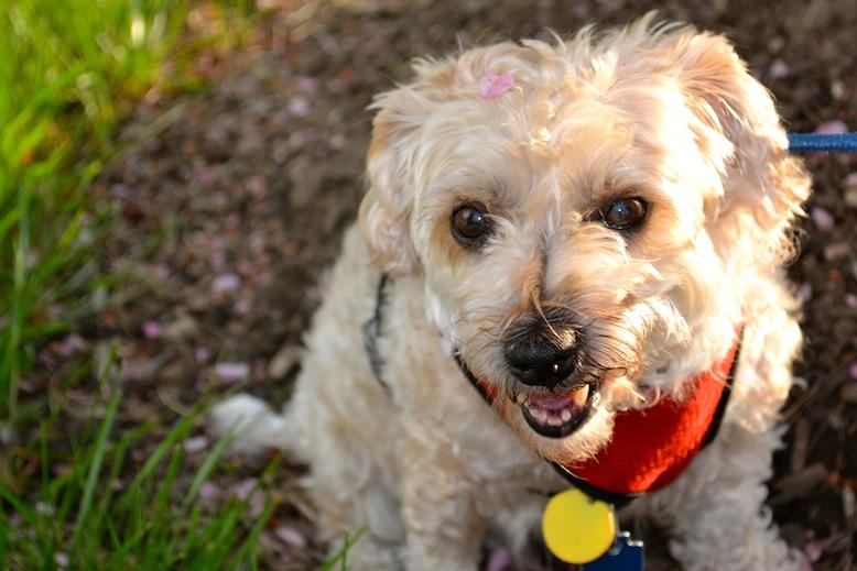 Ruby celebrates Adopt-a-Senior-Dog Month