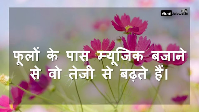 hindi photo shayari  hindi photos download  wallpaper hindi  hindi photo hd  hindi photo gallery  hindi photo image  hindi photos actress gallery  hindi photos for facebook