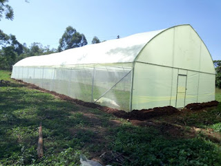 metallic greenhouse company in kenya, kenya wooden greenhouse constructors in Kenya, Tomato greenhouse farming in kenya, greenhouse in Tarime Tanzania