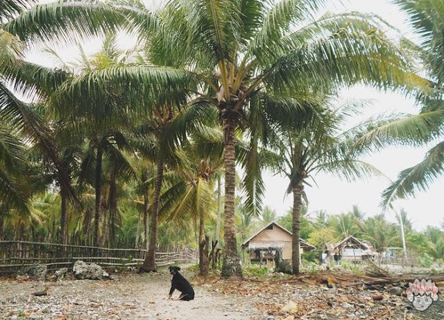 Anjing Penjaga Pulau journeyofalek.com