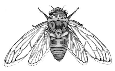 Live art breathe art warm ups for Grasshopper tattoo supply