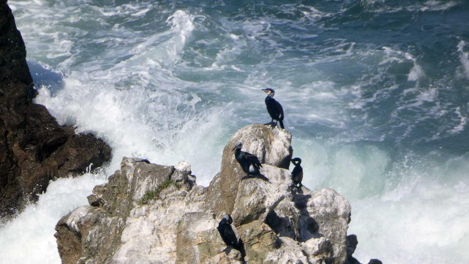 cormoranes 01
