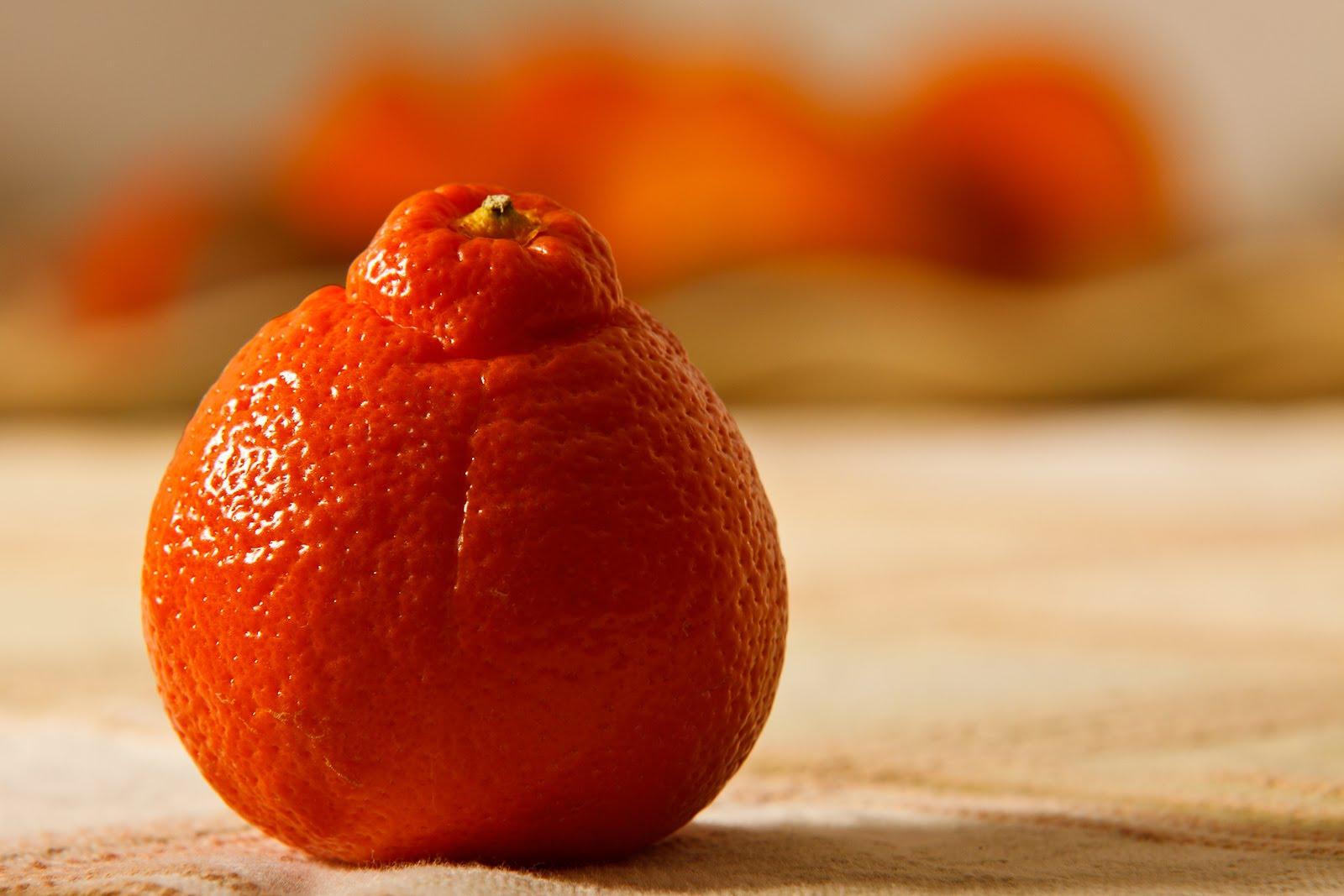 Citrus Enthusiast Tangors Tangerines Tangelos
