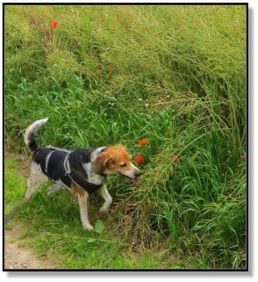 unbekümmert mit Hund unterwegs