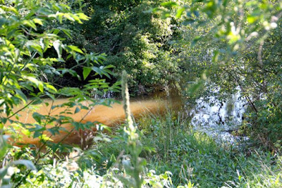 can cover crops create clearer creeks?