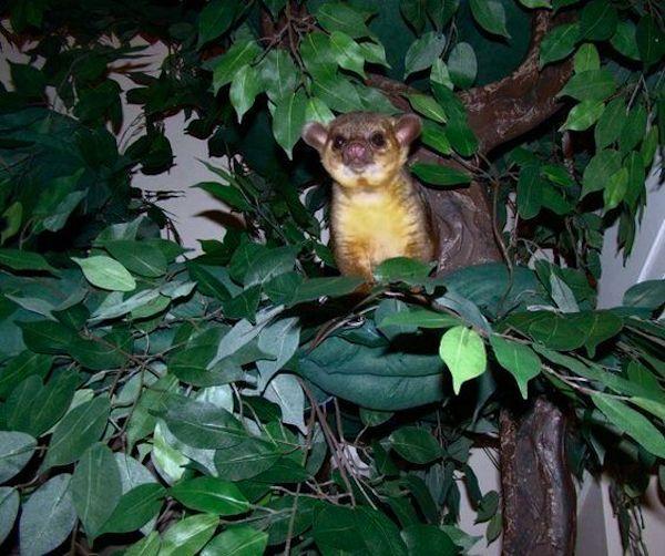 Exotic Pet Trees