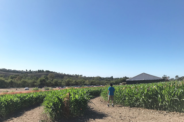 corn mazes in oc