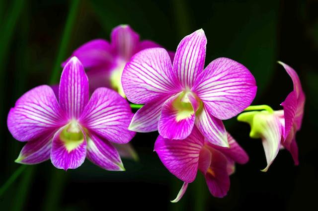 memetik-bunga-angrek-gunung-salak