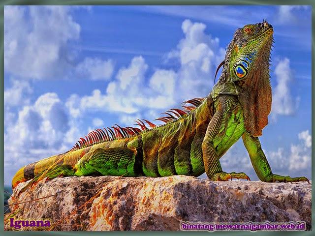 gambar iguana keren