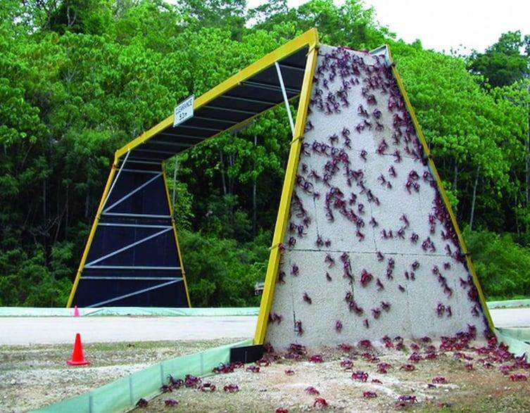 Bridge for Red Crabs in Australia