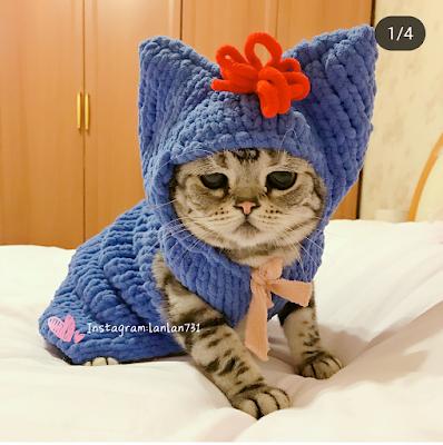 Masih Ingat Luhu ? Kucing Yang Bertampang Paling Menyedihkan, Begini Kehidupannya Setelah Viral 28