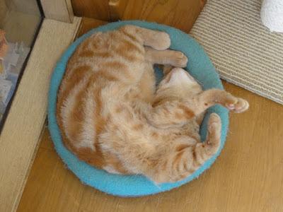 寝相が悪い猫を上から撮った写真