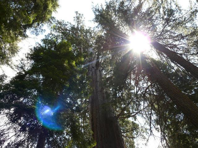visite Sequoia National Park USA