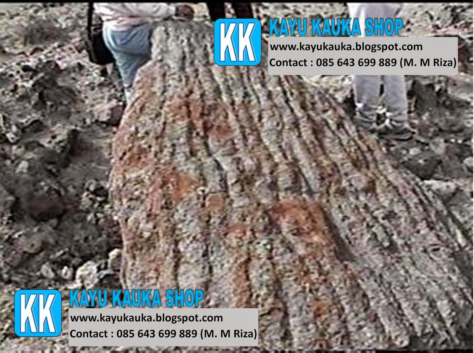 sejarah kayu kaukah