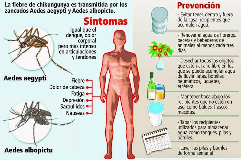 mosquitos adenoma de próstata
