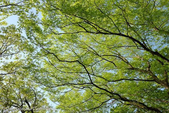 生田緑地の鮮やかな緑