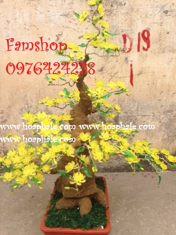 Goc bonsai cay hoa mai tai Tran Vy