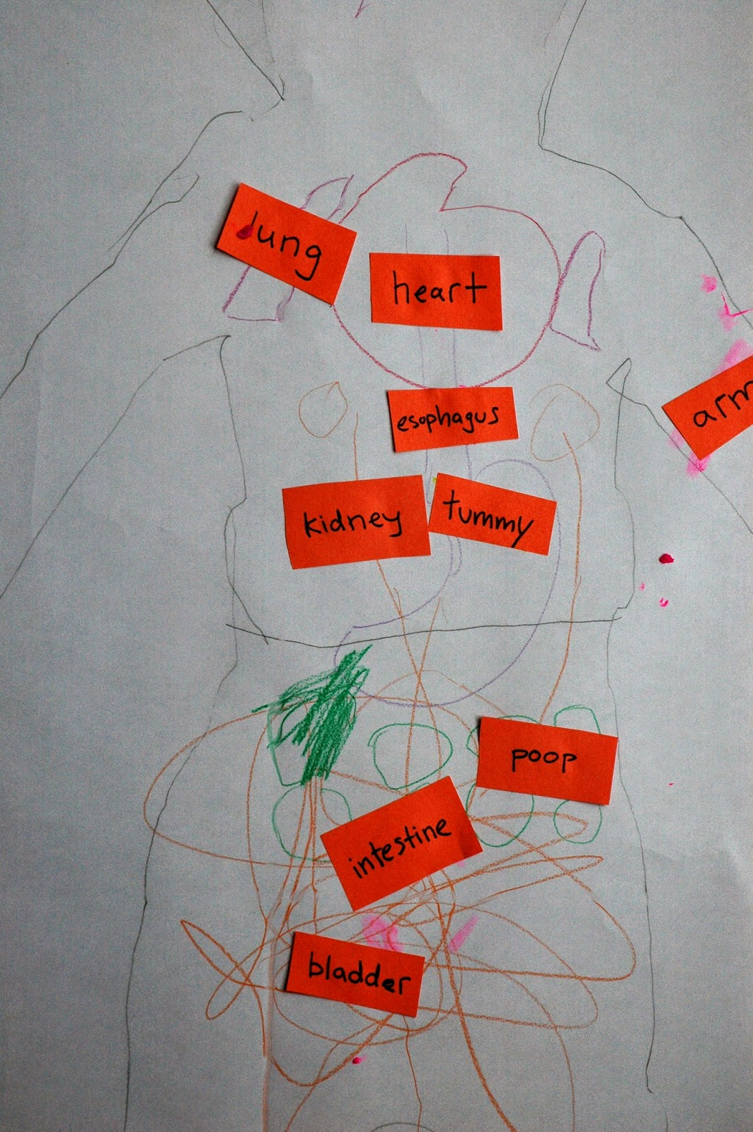 home preschool my body theme week close up organs drawing and labels