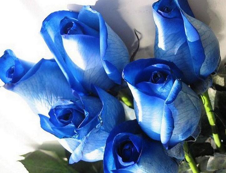 Diperhatikan bahwa tidak semua seharusnya biru bunga biru di tempat teduh.  Beberapa jelas menyimpang dari naungan yang fenomenal. 0229779d9b