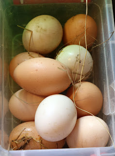 The eggs that the chickens hid