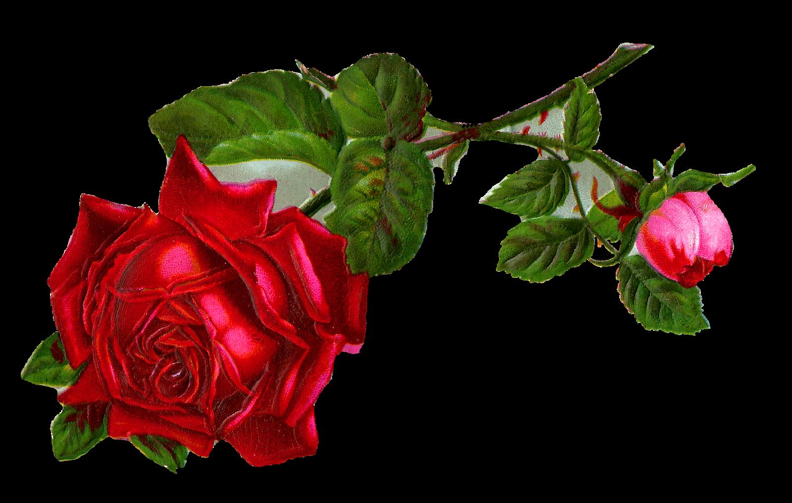 Single Rose Clipart: Antique Images: Stock Red Rose Digital Clip Art