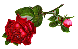 rose clip clipart digital flower cliparts clipartmax antique gm branch single clipground 1016 1600