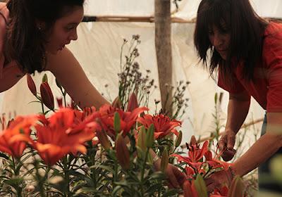 floricultura Villa Ocampo Santa Fe