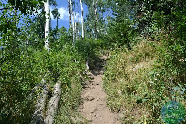 Trail to Willow Lake