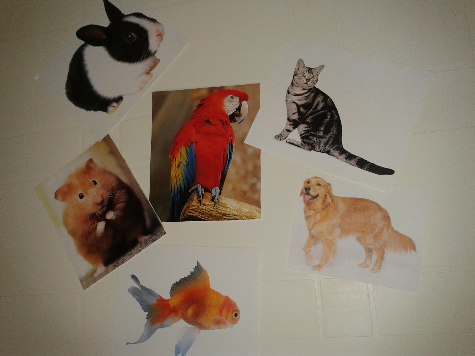 Resources And Materials For Teaching English To Young Learners 4th Grade Unit 7 Pets Vocabulary
