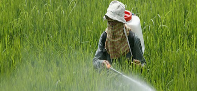 Pesticides Usage in Agriculture Farming