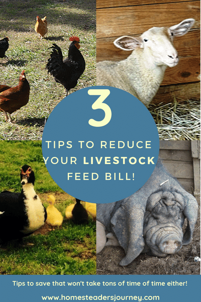 Farm tips! Save on your feed bill without sending lots of extra time!