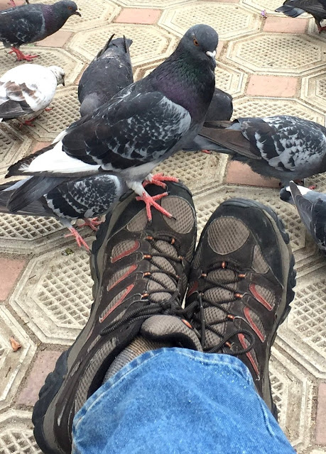 Pigeon on Foot