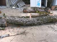 切り出した楠の幹と枝