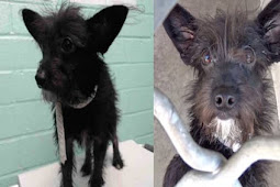 Lacie is the little black terrier that nobody wants, 5 month old pup crying all day as no-one came for her