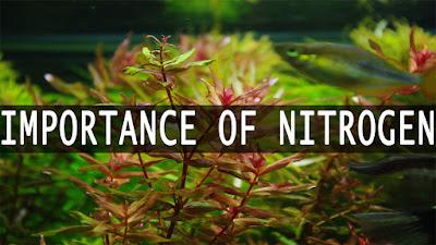 nitrogen for planted tank