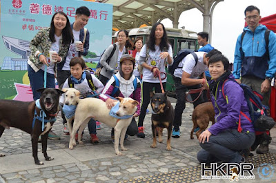 Reports from Hong Kong Dog Rescue - GlobalGiving