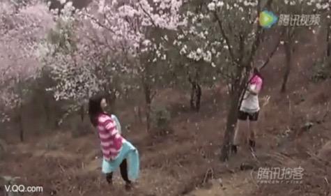 Pokok ceri jadi mangsa aksi melampau