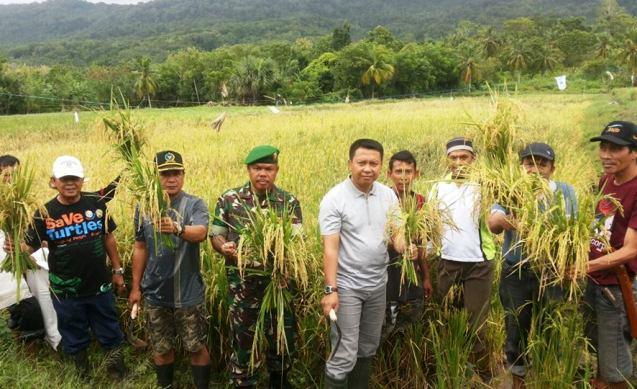 Terbukti Cocok..! ,Sawah Di Bontosikuyu, Panen Perdana