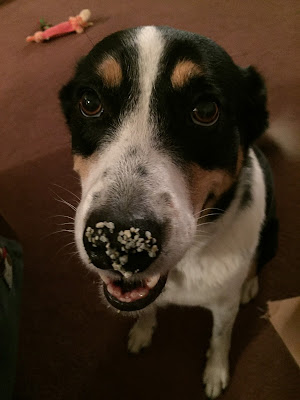 dog with cat litter on nose