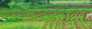 farmer,farming,farmer in the dell song,farmer in the dell rhymes,farmers,farmer hero,farmed,farmer style,local farmer,farmer woman,agriculture