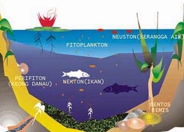 Macam Macam Ekosistem Perairan Zakapedia Pustaka Belajar
