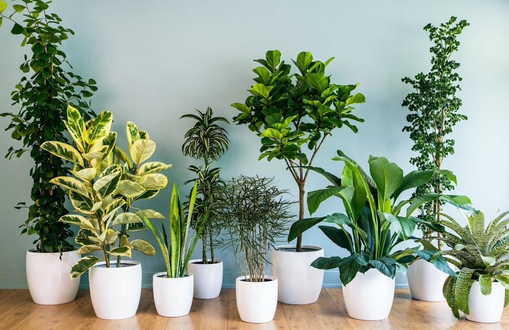 ต้นไม้ชนิดใดบ้างที่ช่วยปรับสมดุลภายในบ้านให้สดชื่น